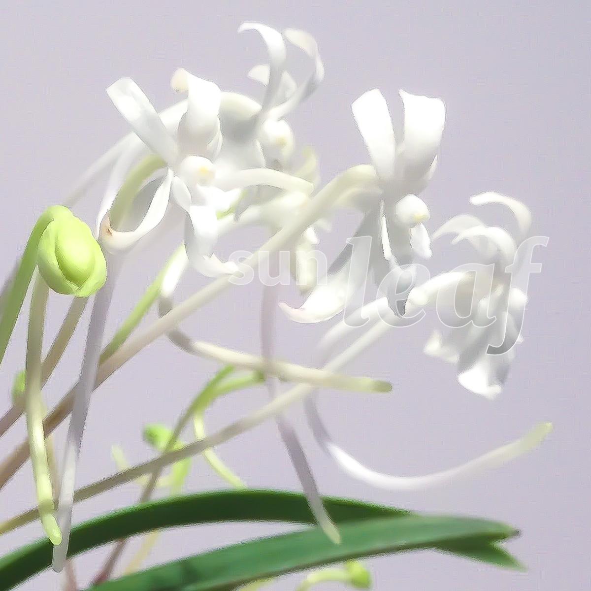 Различия цветка