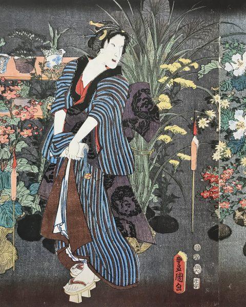 Японские орхидеи: где таится аромат-image