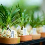 Этикетка с названием растения для неофинетия фальката